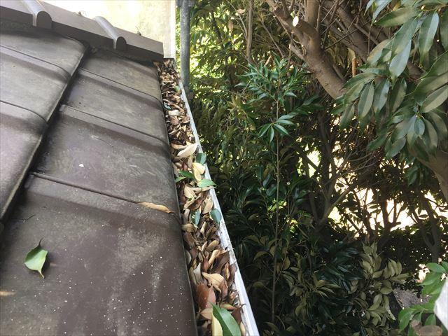 軒樋に葉っぱ詰まり