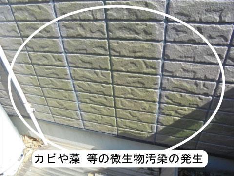 外壁の微生物汚染
