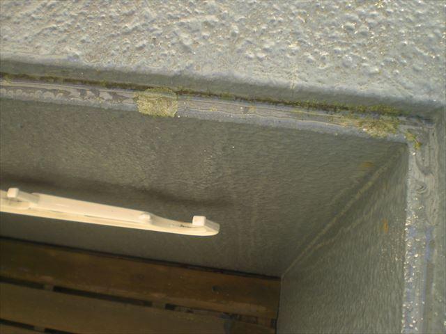外壁 苔洗浄前